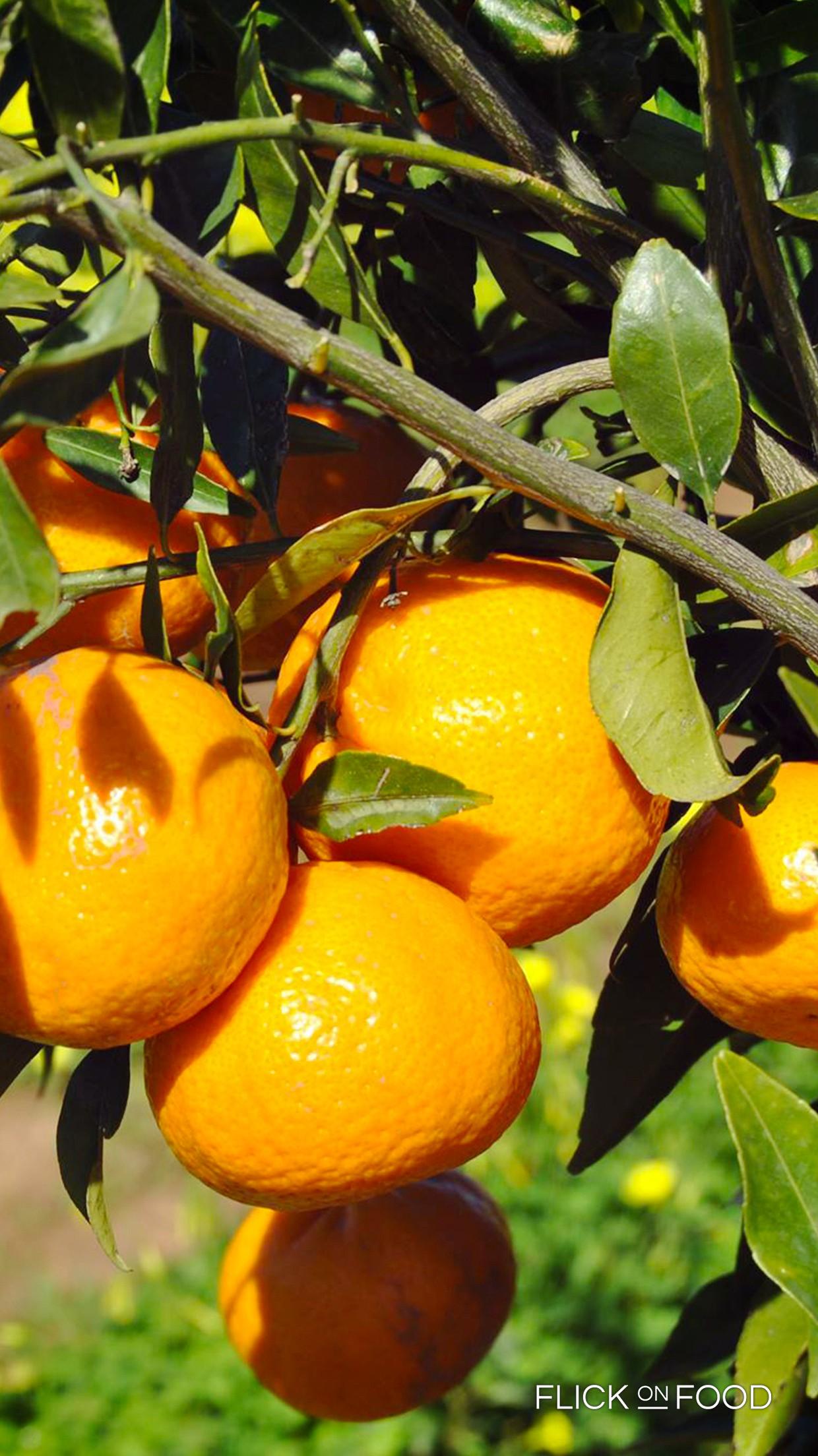 mandarino_tardivo
