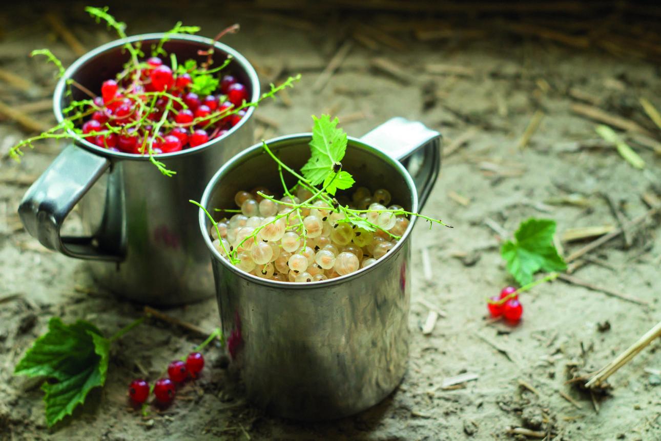 Ribes Bianco | Flick on Food